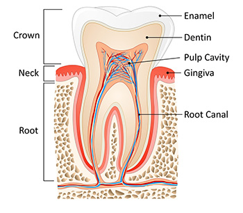 Root Canals- What is the Controversy?